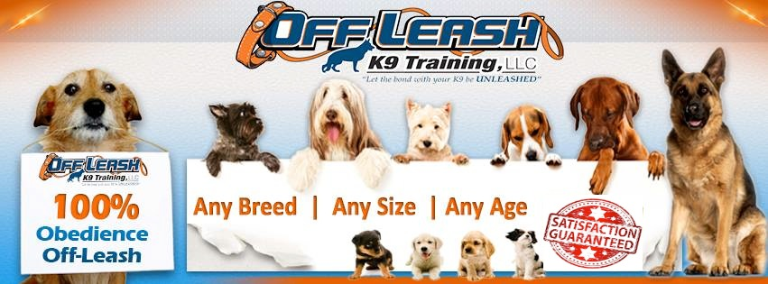dog training charleston sc